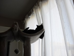 Cat in cat tree