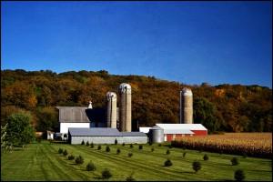 American_farm