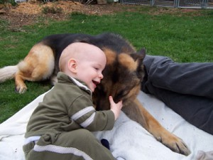 German Shepherd and a Baby