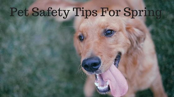 Pet Safety Tips For Spring