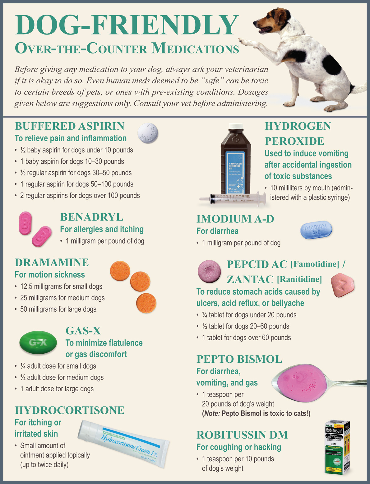 Safe Dog Medications