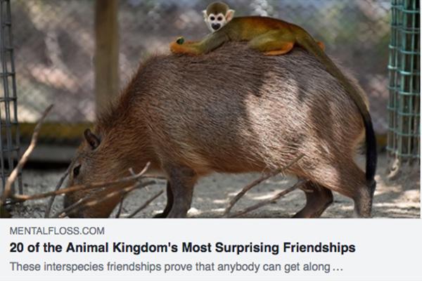 Animal kingdom friendships