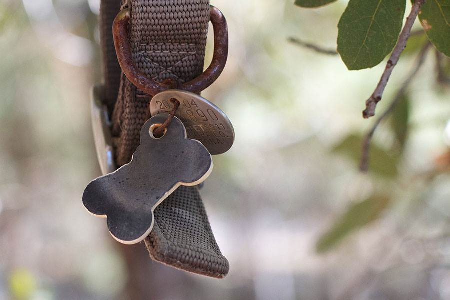 Antique dog tags