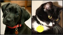 Dog and Cat with I.D. Tags