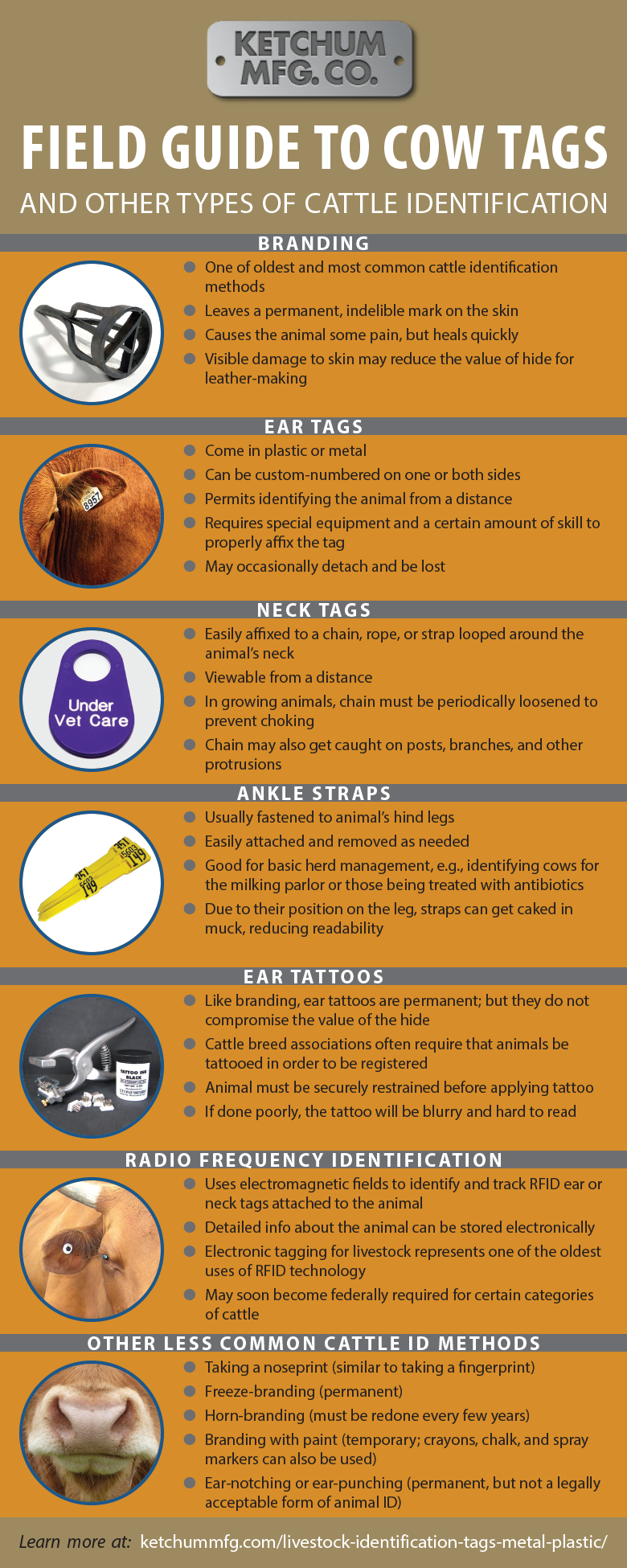 Field Guide to Cow Tags