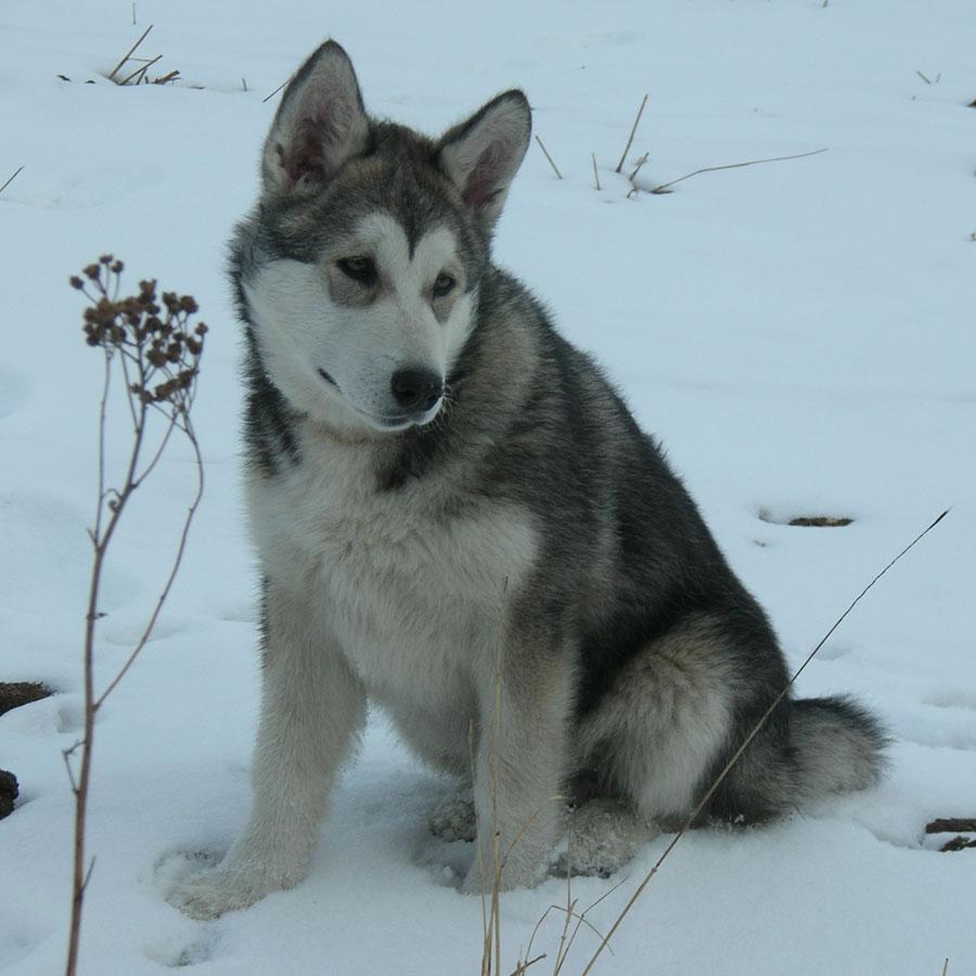 Puppy sitting in snow