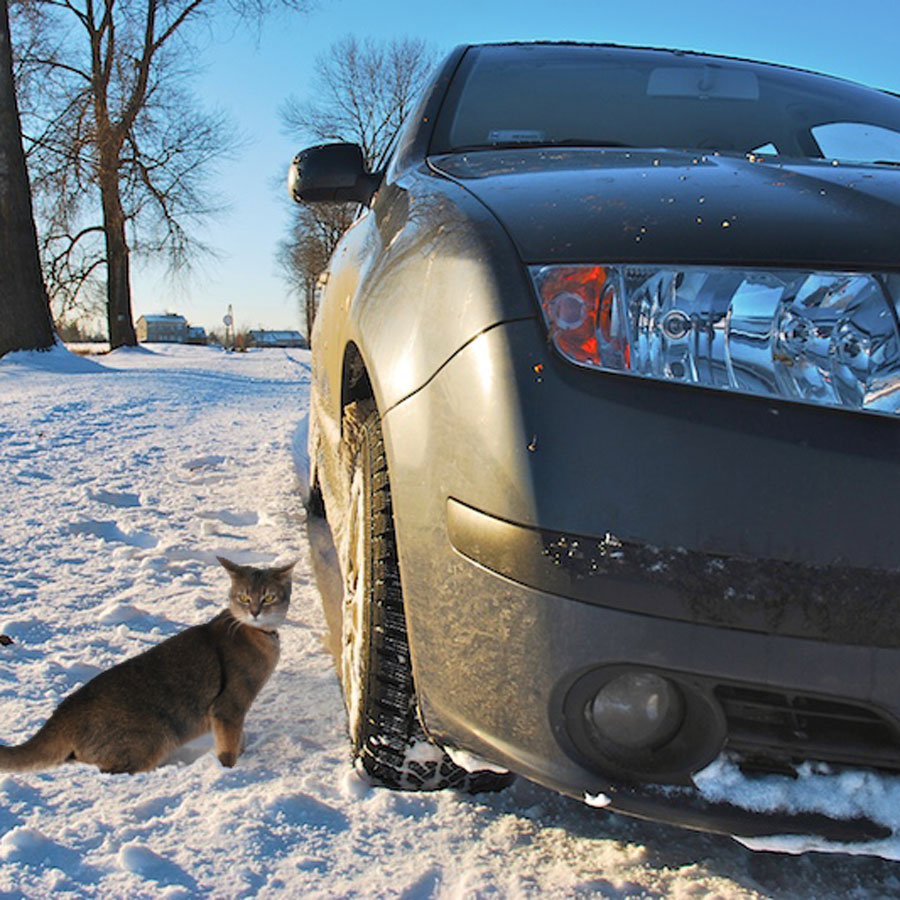 Cat with car in snow