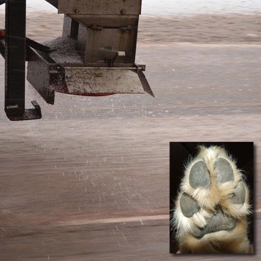 Road salt spreader and dog's paws