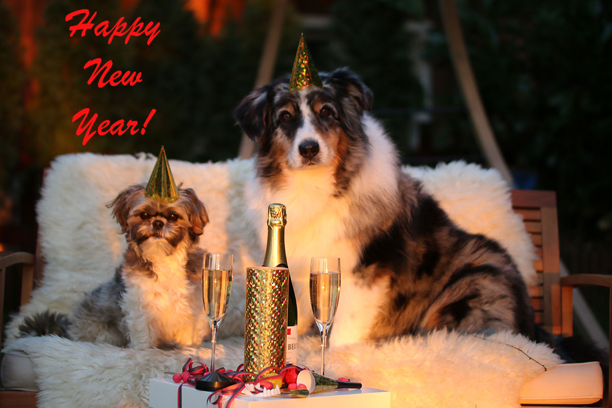 Two dogs celebrating New Year's
