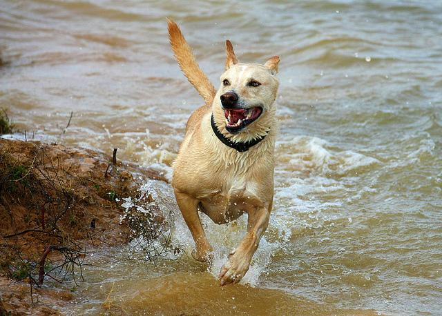 dog-lake