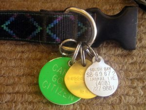 Assorted dog license tags