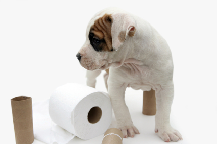 dog-potty-training-tips