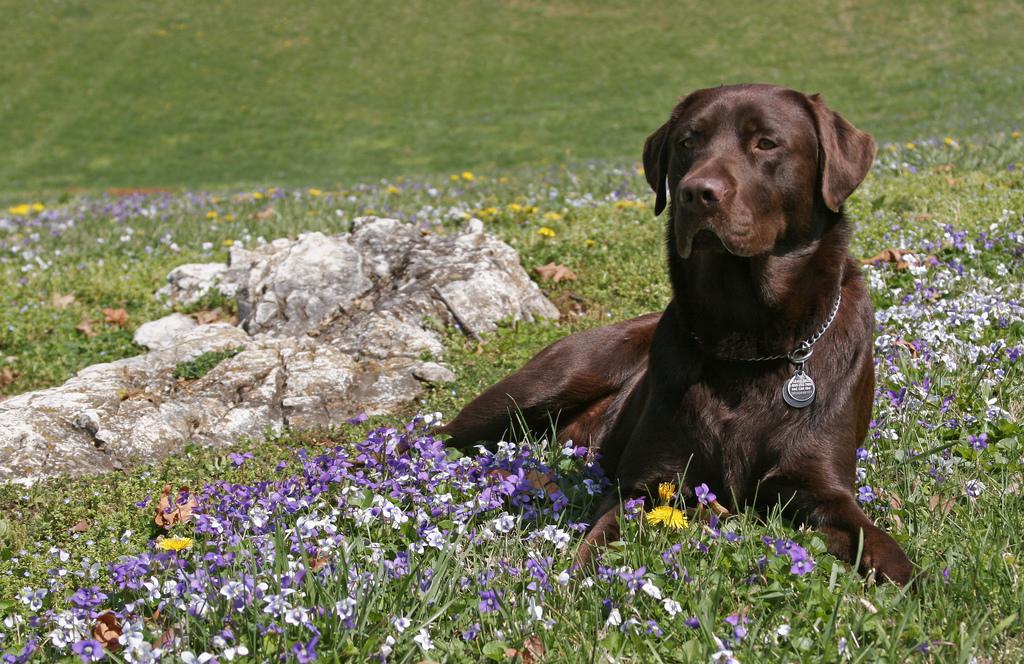 dog_in_spring