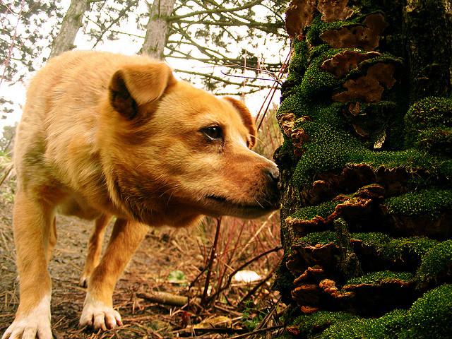 dog_tree