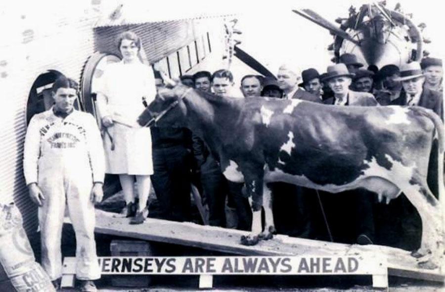 Elm Farm Ollie (a.k.a. Nellie Jay)