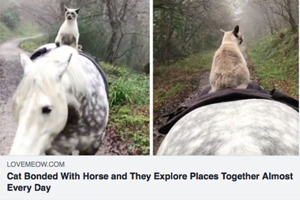 Friendship between horse and cat