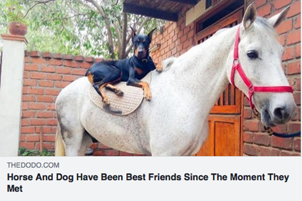 Friendship between horse and dog