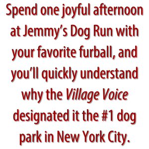 Pullquote: Spend one joyful afternoon at Jemmy's Dog Run