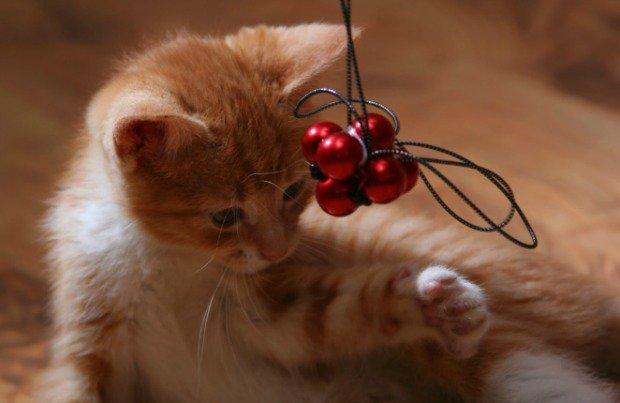 Kitten-indoor-playtime