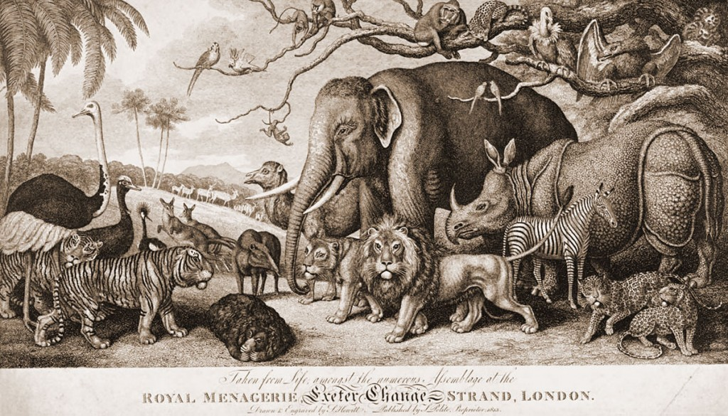 Royal Menagerie - Museum of London