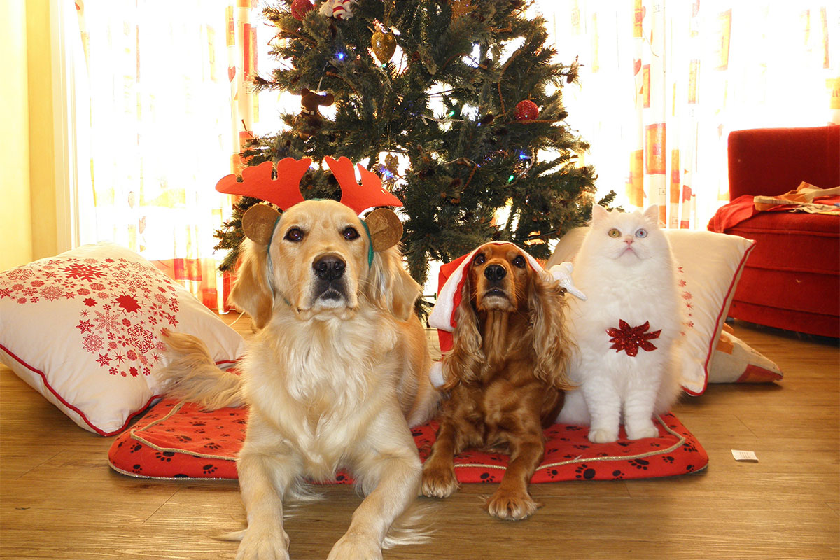 Dogs and cat in front of Christmas tree
