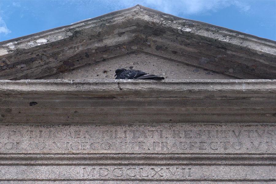 Pigeon resting in cornice, Milan