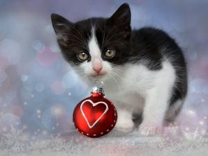 Cat with Christmas ball