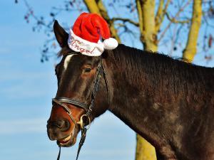 Horse wearing Santa hat