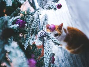 Cat eyeing Christmas tree decorations