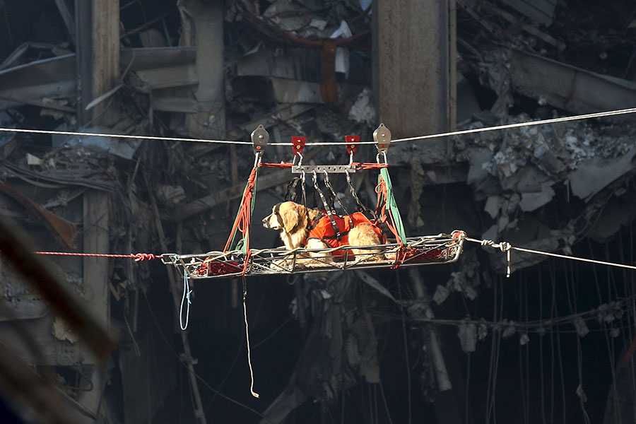 Riley the rescue dog at 9/11 site