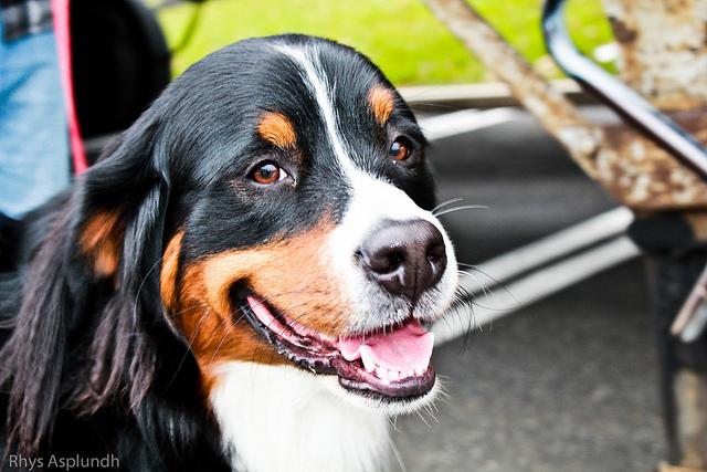 summerdog